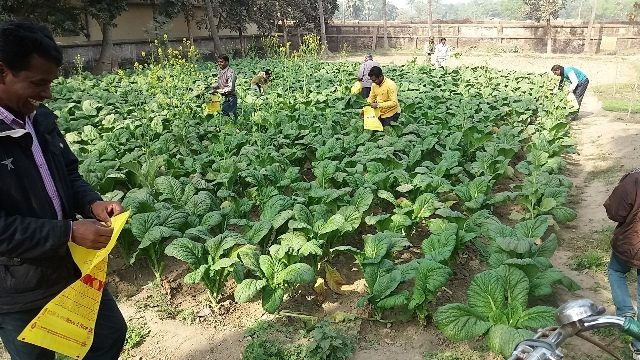Kinderpatenschaft Azimganji eigene Anpflanzungen
