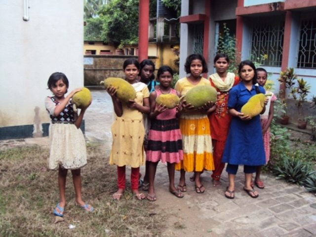 Kinderpatenschaft Bongaon Ernte