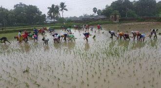 Kinderpatenschaft Joypur bei der Ernte