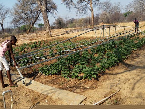 Projekt Omega Wasser für Gemüsebeete 2