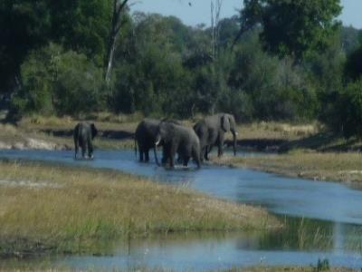 2015 Reisebericht Namibia 31 Elefantenherde
