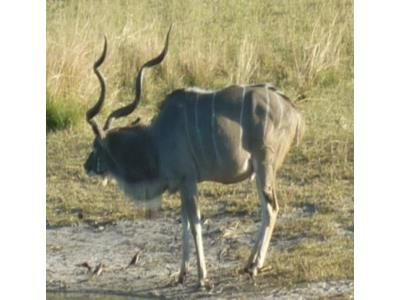 2015 Reisebericht Namibia 32 Antilope