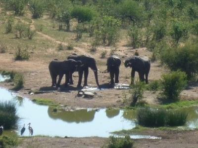 2015 Reisebericht Namibia 42 Elefanten Wasserloch
